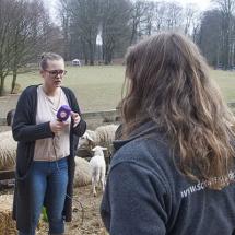 Lammetjesdag 2018 Rhedense Schaapskudde