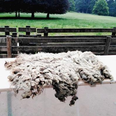 schapenvacht_voor_vilten_spinnen